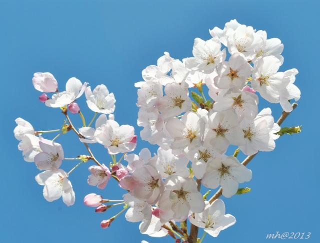 spring-thg-3-2013-480