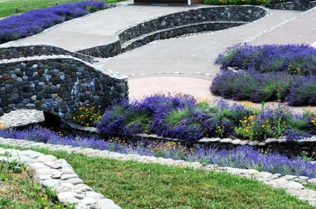 Lavender 2013 (29)