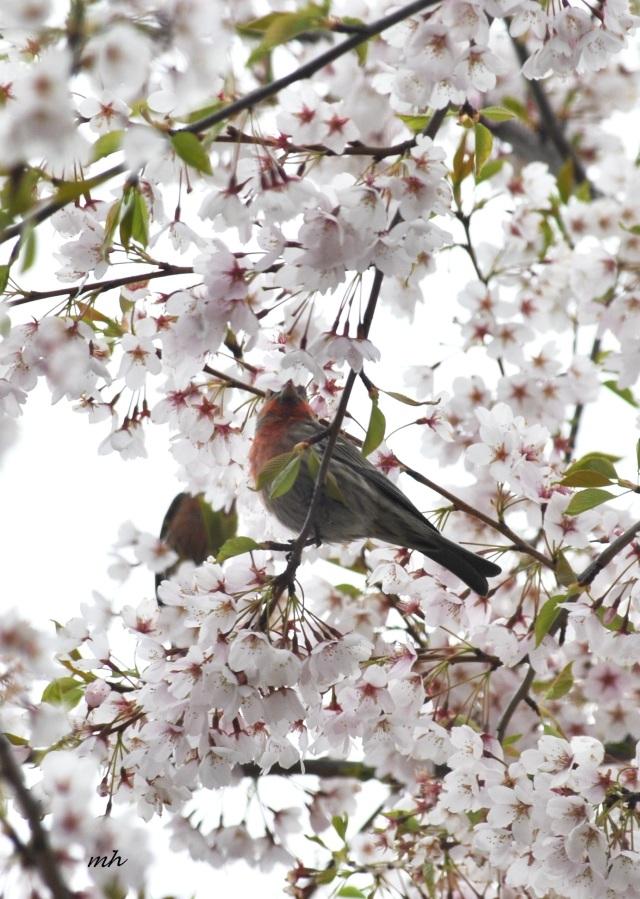 Spring, April - 2014 (7)